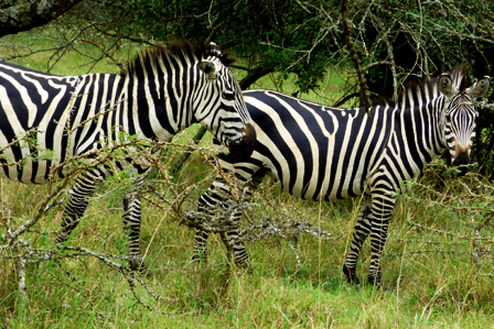 12 Days Uganda safari